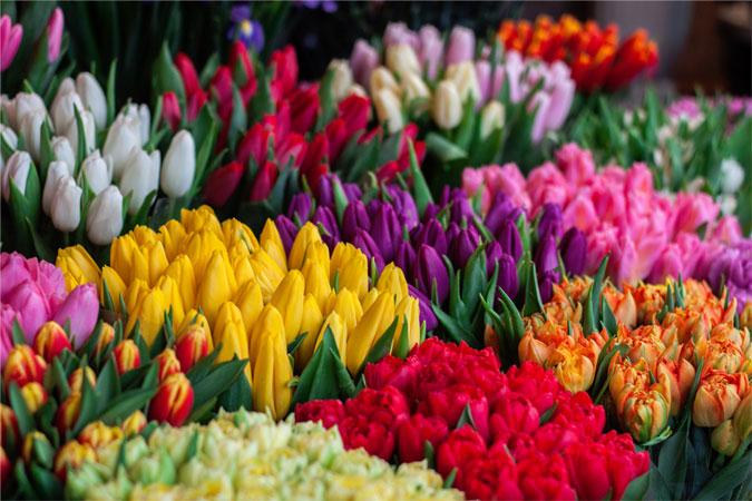 Fresh Flower Subscriptions